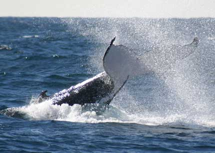 Whale Watching Sydney - Tourism Bookings