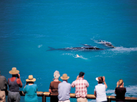 Whale Watching At Head Of Bight - Tourism Bookings