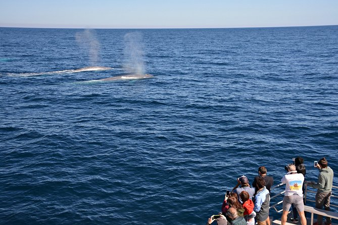 Blue Whale Perth Canyon Expedition - Tourism Bookings