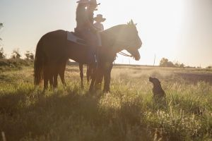 Balonne Cutting Horse Futurity - Tourism Bookings